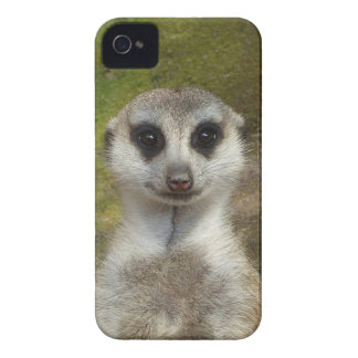 02_o divertido de Meerkat 002 Funda Para iPhone 4