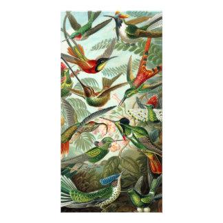 12 pájaros americanos del tarareo crían pintado tarjetas fotográficas personalizadas