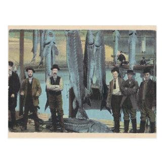 1914 postal del esturión - captura del esturión