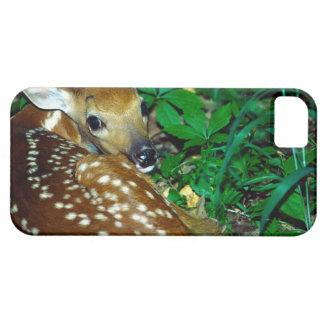 24114390 FUNDA PARA iPhone SE/5/5s