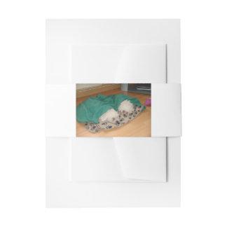 2 Sleepy_Bichon_Puppies Cintas Para Invitaciones