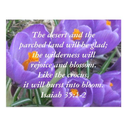35:1 de Isaías - ~ 2 el azafrán Tarjeta Postal