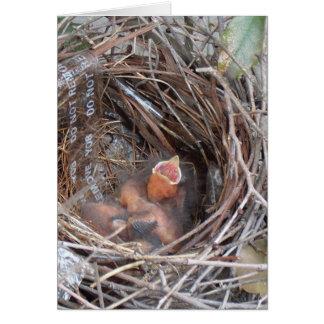 3 pájaros de bebé recién nacidos en una jerarquía