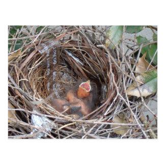3 pájaros de bebé recién nacidos en una jerarquía tarjetas postales