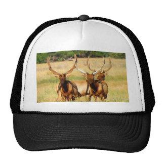 3 toros (alces) gorra