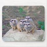 4 Meerkats Mousepad de mirada Tapetes De Raton