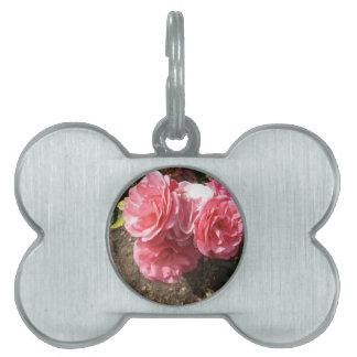 #5 color de rosa placa para mascotas