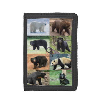 8 osos del mundo