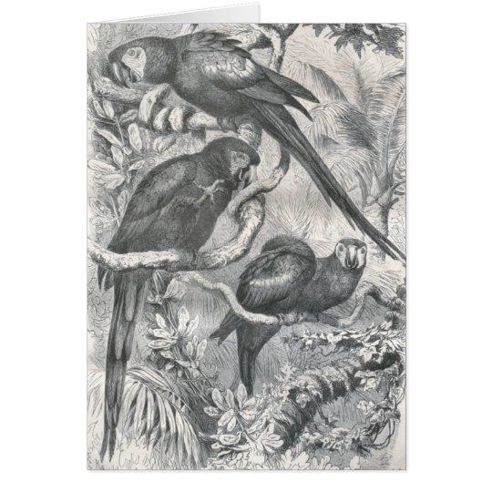 A.E. Brehm - Macaws Tarjeta De Felicitación