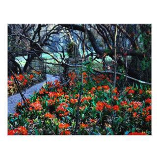 A través de campos de la belleza folleto 21,6 x 28 cm