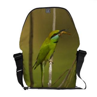 Abeja-comedor verde que come el insecto bolsa de mensajeria