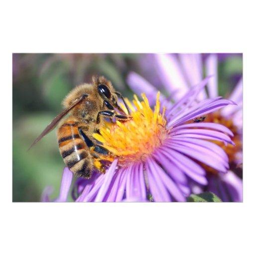 Abeja de la miel en la flor rosada púrpura tarjetas informativas