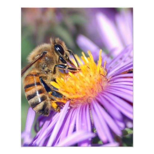 Abeja de la miel en la flor rosada púrpura tarjetones
