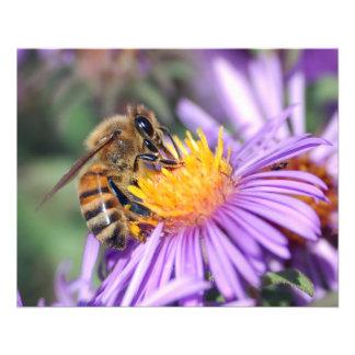 Abeja de la miel en la flor rosada púrpura folleto 11,4 x 14,2 cm