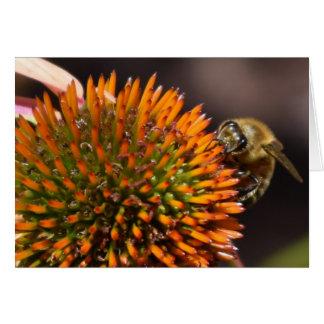 Abeja de la miel en tarjeta de felicitación de