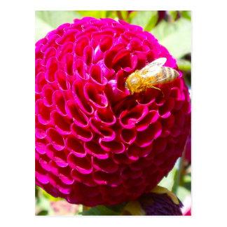 Abeja de la miel en una flor postal