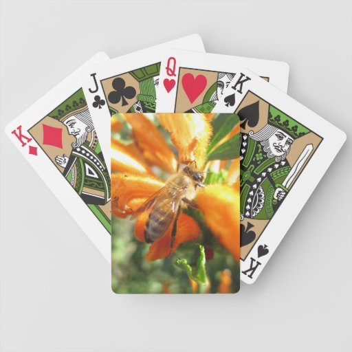 Abeja en la cubierta de la flor de la cola del baraja cartas de poker
