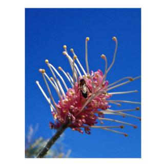 Abeja en la flor rosada de Grevillia Tarjeton