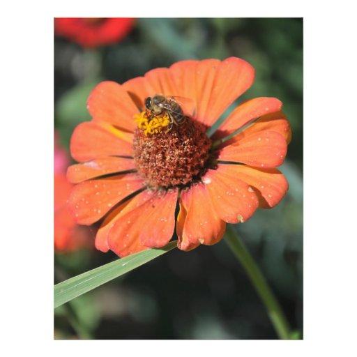 Abeja en una flor anaranjada flyer personalizado