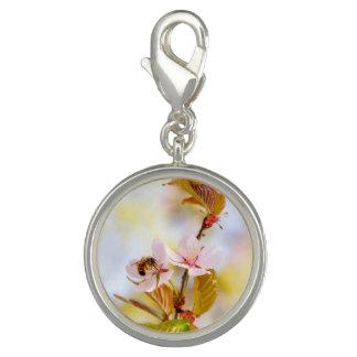Abeja en una flor de la cereza dije con foto