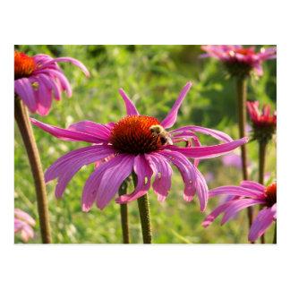 Abeja en una flor tarjeta postal