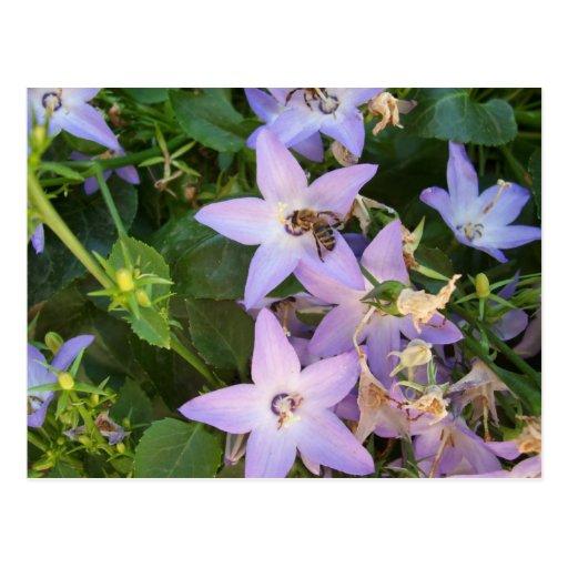 Abeja en una flor tarjetas postales