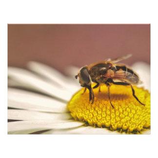 Abeja en una macro de la flor blanca flyer personalizado