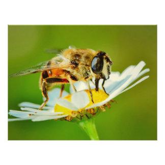 Abeja en una macro de la flor blanca tarjetón