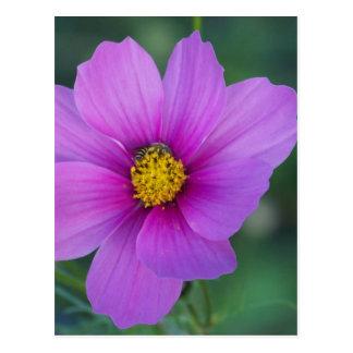 Abeja en Wildflower Tarjetas Postales