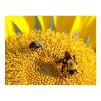 Abeja manosee y de la miel postal