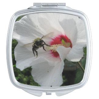 Abeja que saca del rosa blanco del acuerdo de espejos compactos
