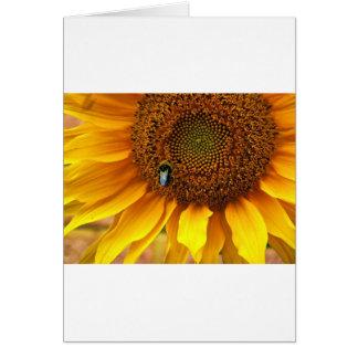 Abeja soleada tarjeta de felicitación