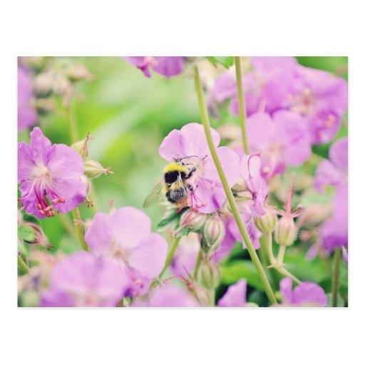 abeja postales