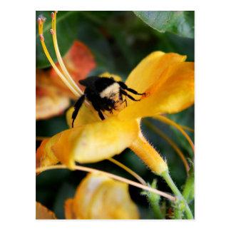 Abeja y lirio tigrado de la miel postal