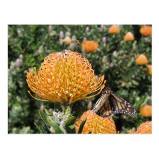 Abeja y mariposa del Protea Postal