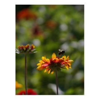 Abeja y postal roja de las flores del naranja