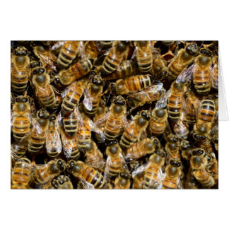 Abejas de la miel felicitación