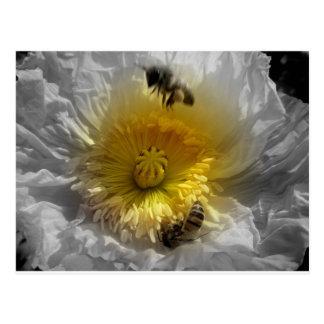 Abejas de la miel y amapola blanca postal