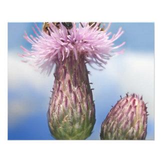 Abejas en las flores rosadas de Arvense del Cirsiu Tarjetones