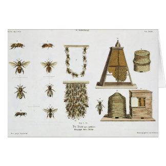 "Abejas y apicultura, ""de la persona de tierra firm tarjeton"