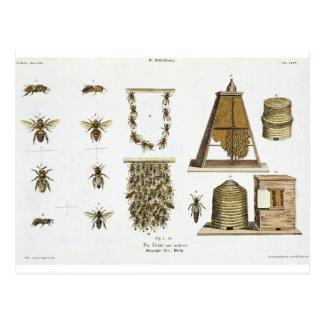 """Abejas y apicultura, """"de la persona de tierra postal"""