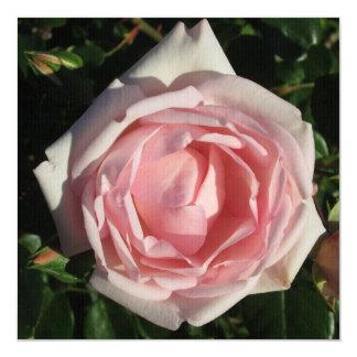 Abertura del rosa color de rosa invitación 13,3 cm x 13,3cm