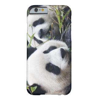 Abrazos de oso de panda funda para iPhone 6 barely there