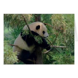 Abrazos de oso de panda tarjeta de felicitación