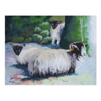 Abrigar la postal de las ovejas