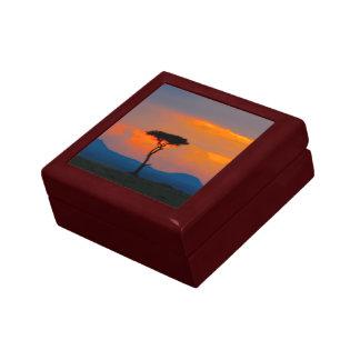 Acacia y puesta del sol sobre la caja de regalo de