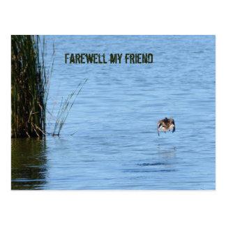 Adiós mi amigo tarjeta postal