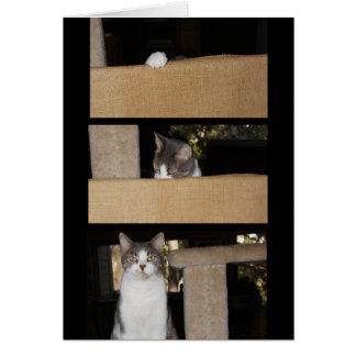 Admirador divertido del gato tarjeta de felicitación