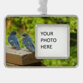 Adorno Con Marco Fotografía del pájaro de la naturaleza de los