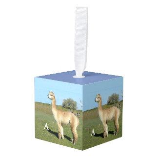 Adorno Cúbico A está para la alpaca